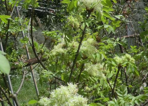 fioritura agriturismo poderepilar