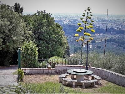 floraison de agave